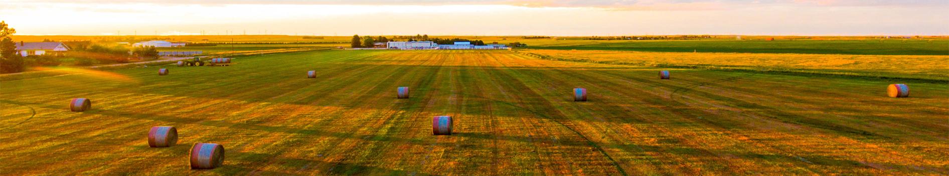 Farmer's Cuts // Balers & Netwrap